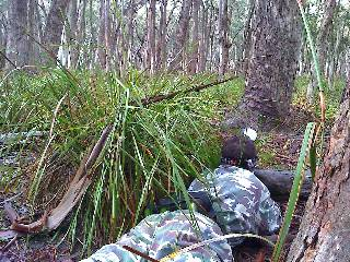 This paintball player is using the thick bush surrounding to ambush any enemy who comes too close.